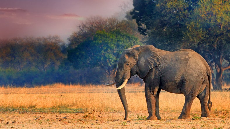 Jak zjeść słonia? Czyli rozpracuj projekt Autyzm kawałek po kawałku!